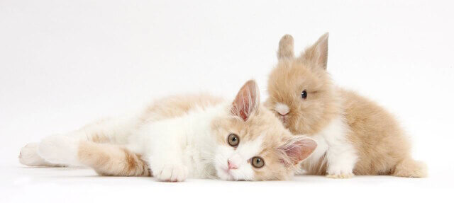 cute bunnies and kittens look alike 3 (1)