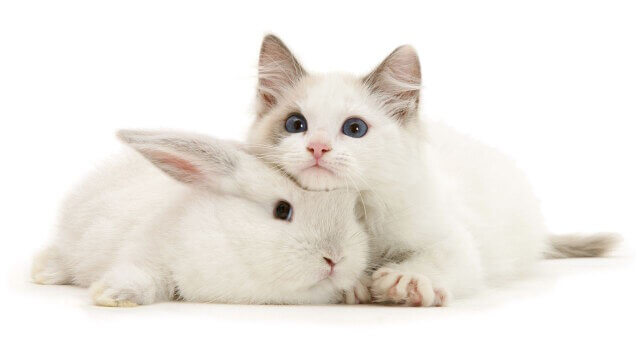 cute bunnies and kittens look alike 5 (1)
