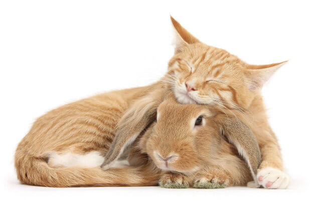 cute bunnies and kittens look alike 6 (1)