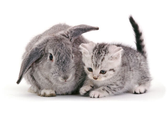 cute bunnies and kittens look alike 7 (1)