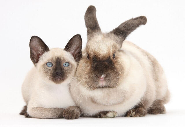 cute bunnies and kittens look alike 8 (1)