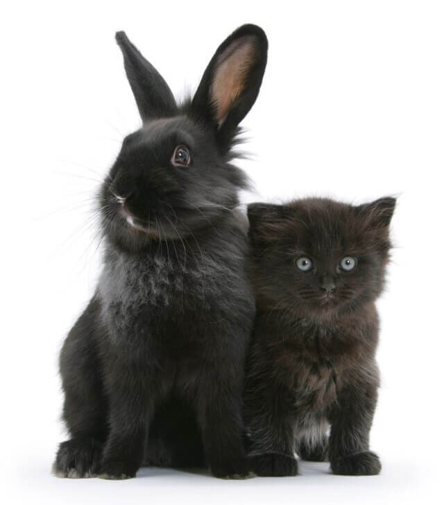 cute bunnies and kittens look alike 9 (1)