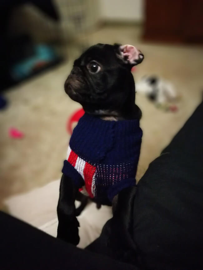dogs in clothes 10 (1)