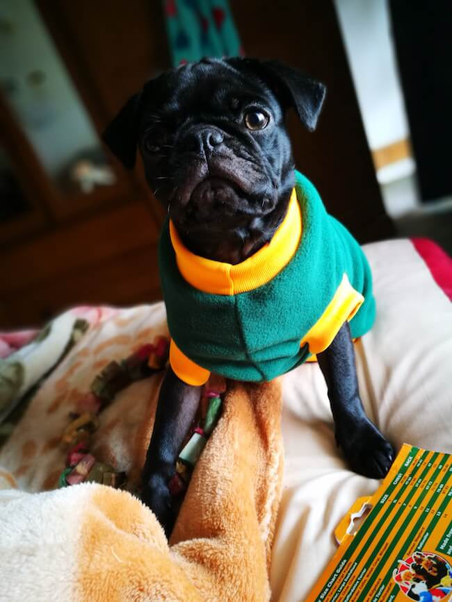 dogs in sweaters 2 (1)