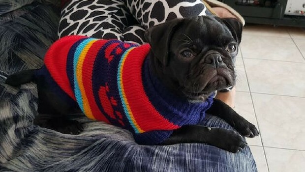 dogs in sweaters feat (1)