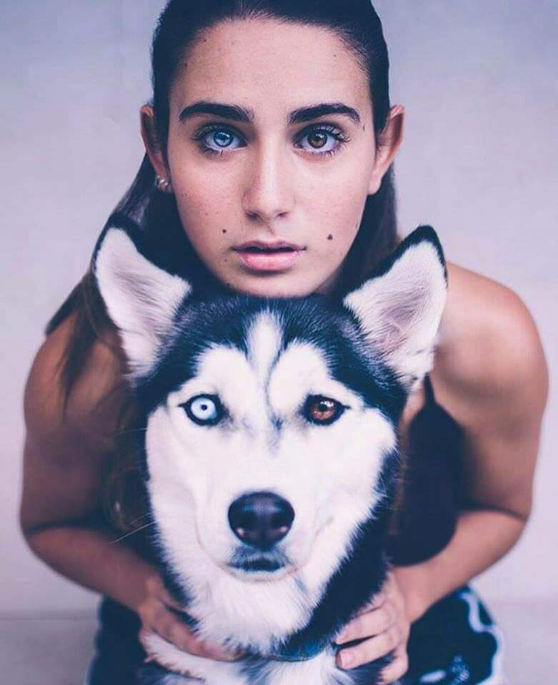 husky with different color eyes (1)