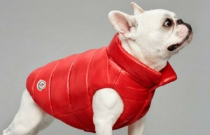 luxury puffer jackets for dogs feat (1)