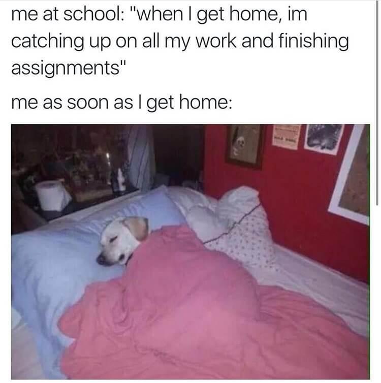 nurses school memes 14 (1)