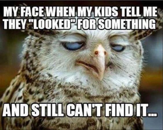 owl puns 10 (1)