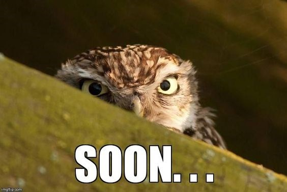 owl puns 12 (1)