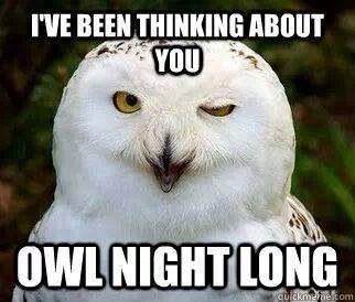 owl pics 14 (1)