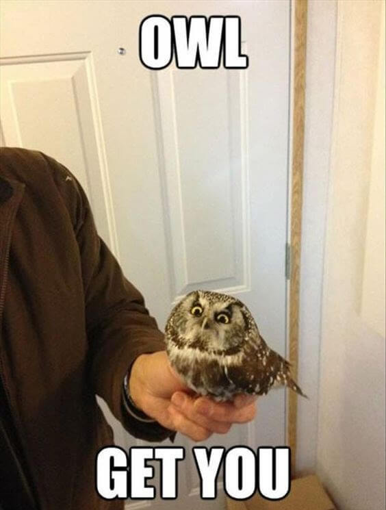 owl pics 15 (1)