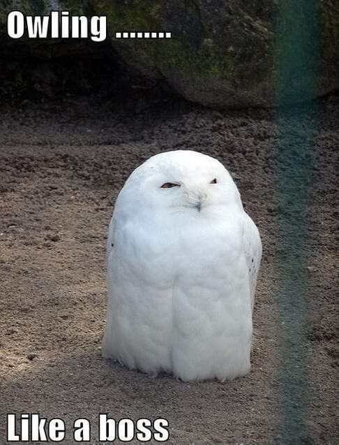 owl pics 16 (1)