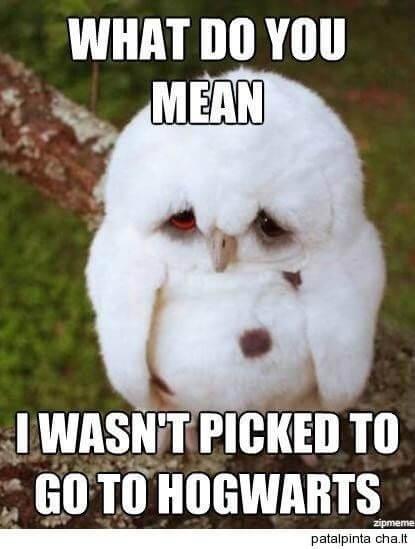 owl memes 2 (1)