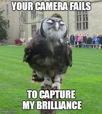 owl images 22 (1)