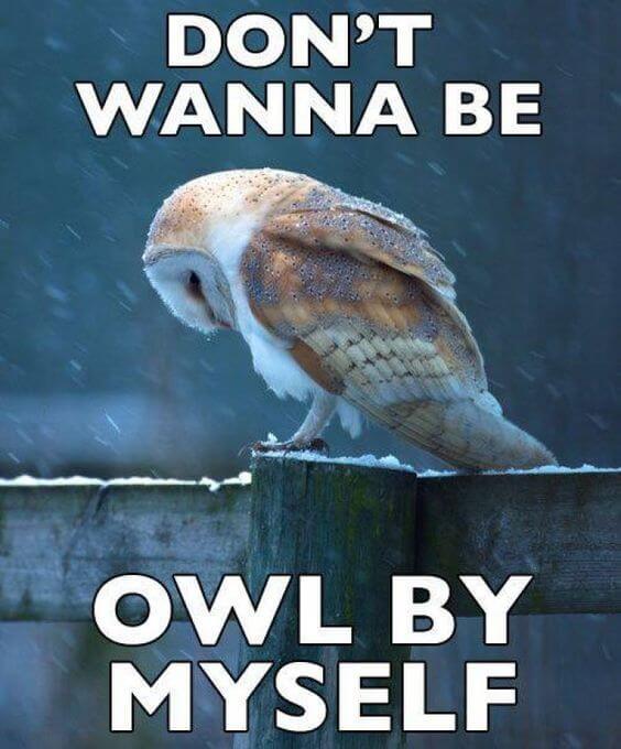 funny owls 23 (1)