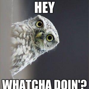 funny owls 24 (1)