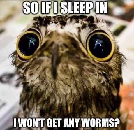funny owls 26 (1)
