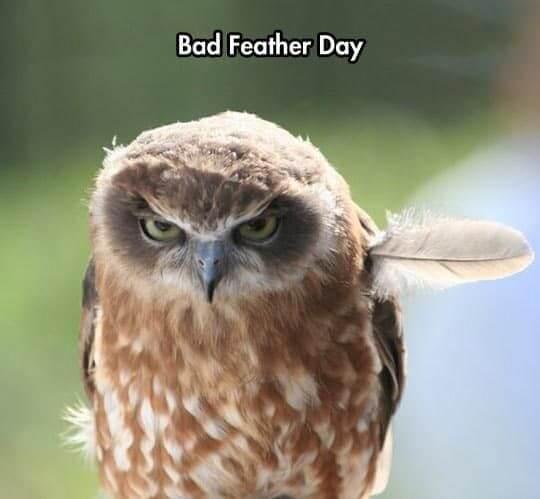 owl memes 29 (1)