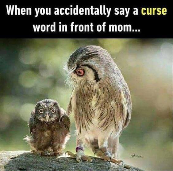 owls funny 3 (1)