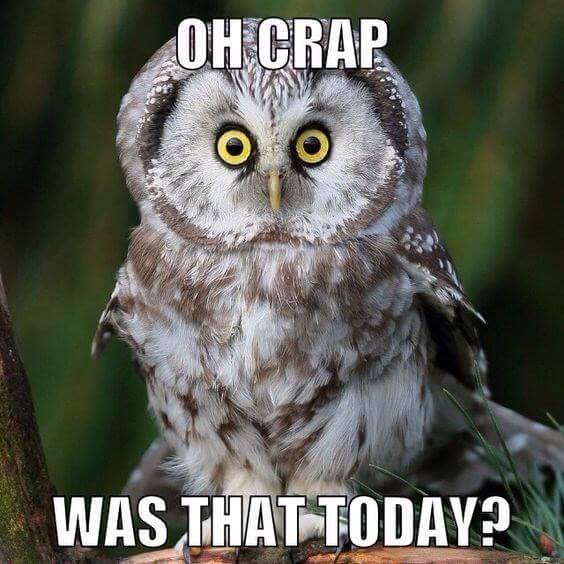 owls funny 4 (1)