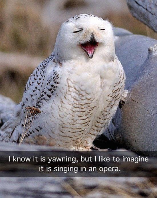 owls funny 5 (1)