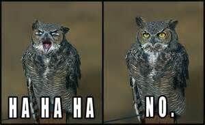 owls funny 6 (1)