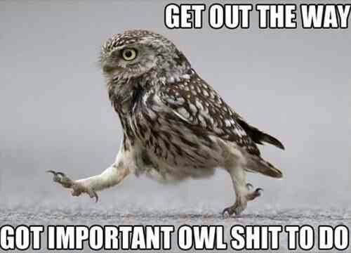 owls funny 7 (1)