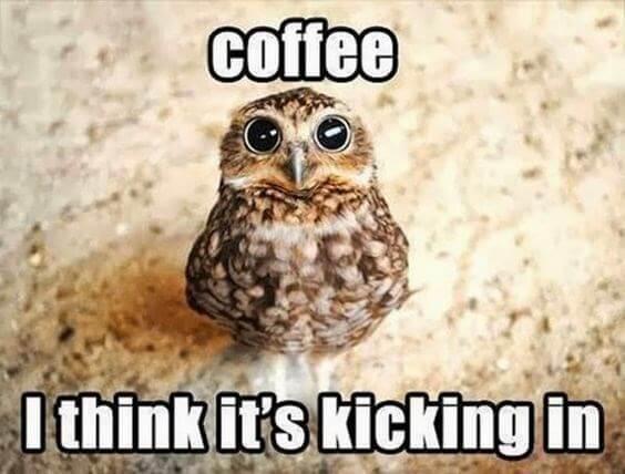 owl puns 8 (1)