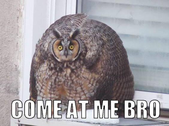 owl puns 9 (1)