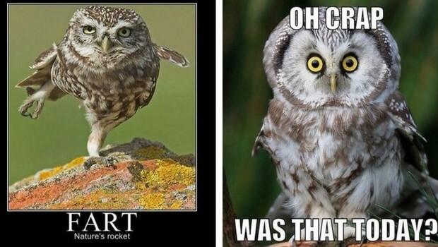 owl memes feat (1)