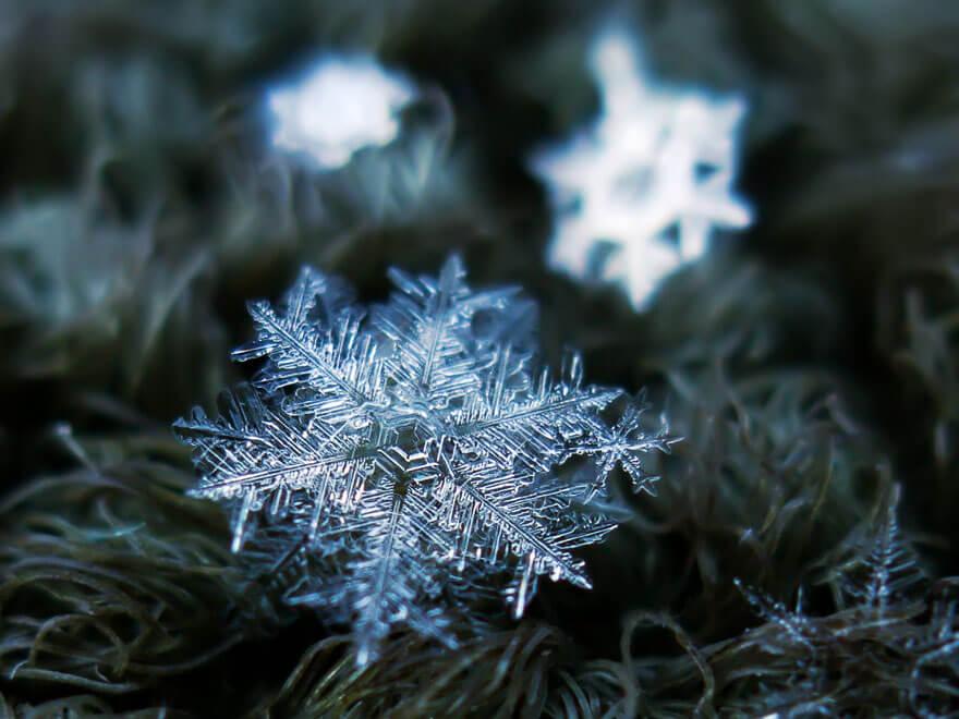 snowflakes macro photography 14 (1)