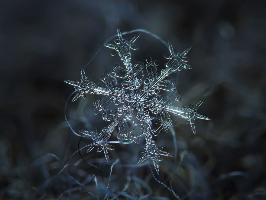 snowflakes photography 3 (1)