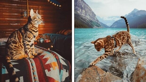 suki the cat feat (1)