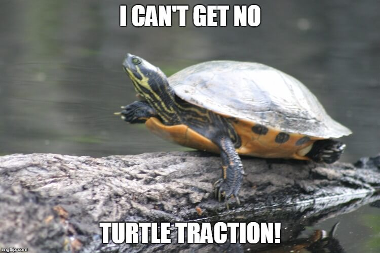 marine tortoise memes 30 (1)