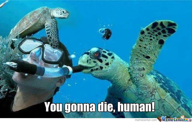 tortoise memes 31 (1)