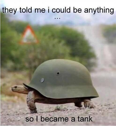 tortoise memes 32 (1)