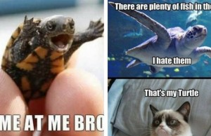 turtle memes feat (1)