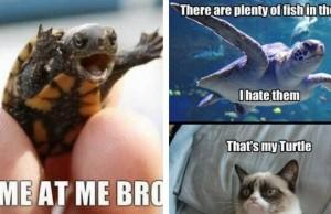 turtle memes feat (1)