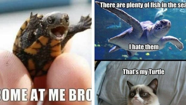 29 Hilarious Turtle Memes That Are So Funny They Re