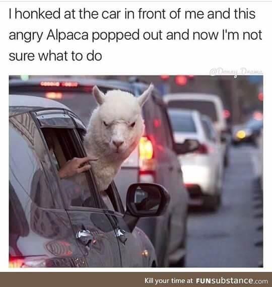 Alpaca Memes 2 (1)