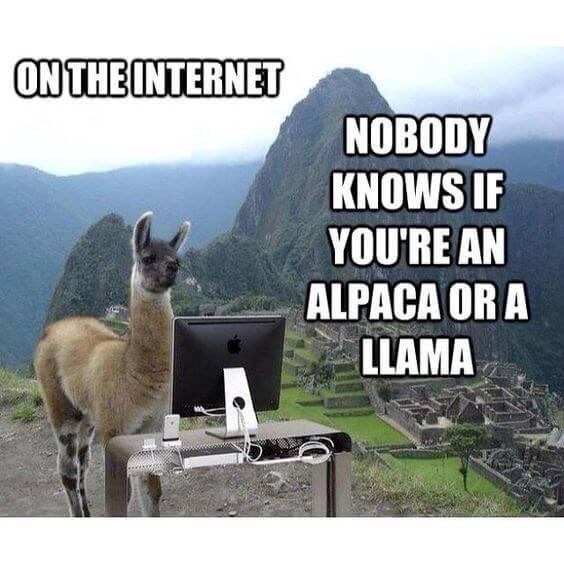 Alpaca images 7 (1)