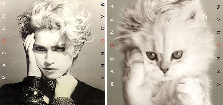 ablum covers replaced with kittens 1 (1)