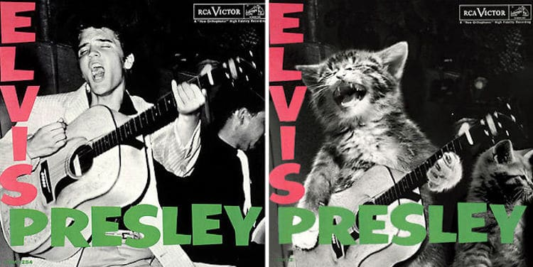 ablum covers replaced with kittens 11 (1)