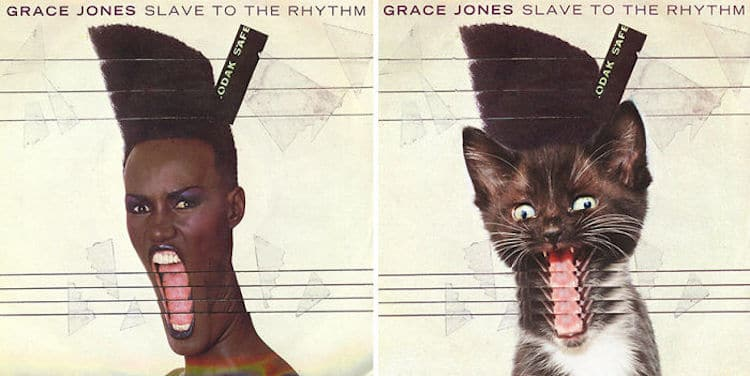 ablum covers replaced with kittens 13 (1)