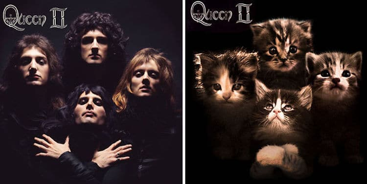 ablum covers replaced with kittens 14 (1)