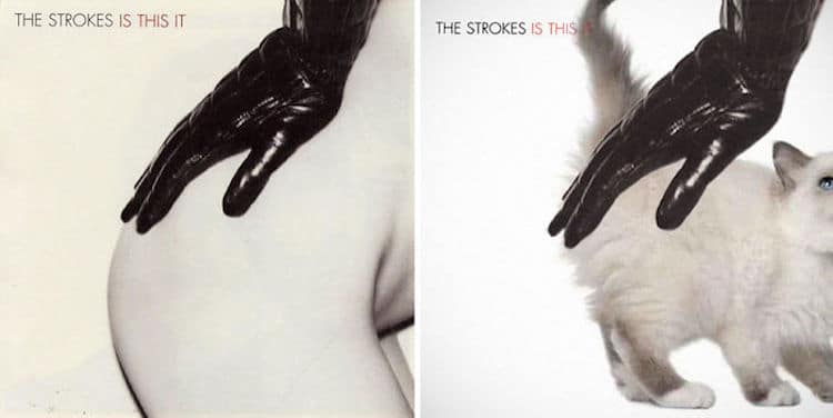 ablum covers replaced with kittens 15 (1)