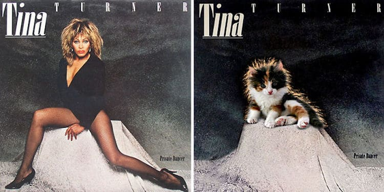 ablum covers replaced with kittens 19 (1)