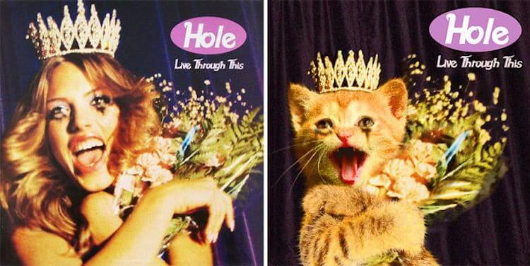 ablum covers replaced with kittens 20 (1)