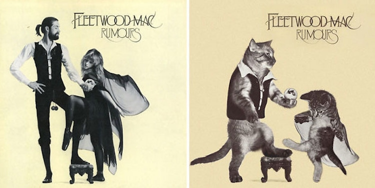 ablum covers replaced with kittens 21